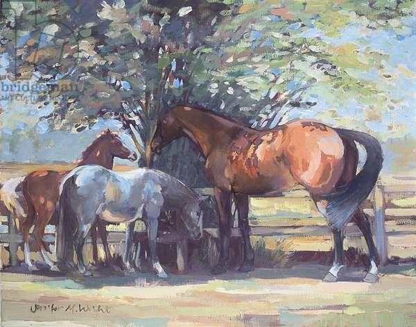 Horses - Summer Flies, 1990 (oil on board)