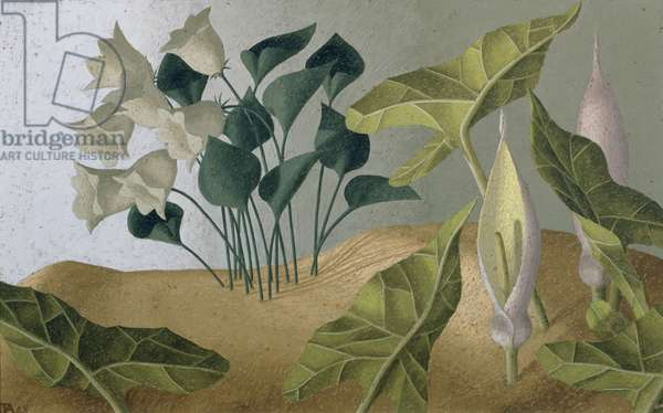 Bell Flowers, 1948 (oil on canvas)