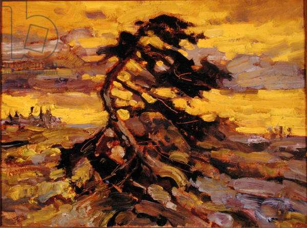Island Pine Summer (oil on canvas)