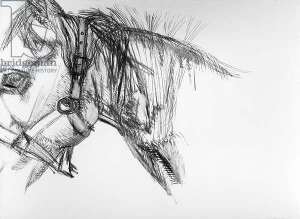 'Pegasus', 1983 (charcoal) (b/w photo)