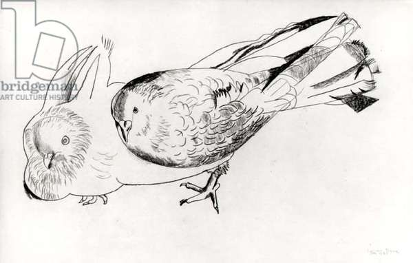 Two Pigeons, 1947 (crayon) (b/w photo)