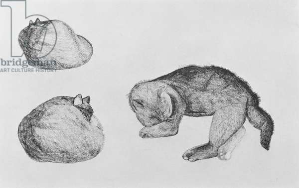 Studies of a Cat, 1943 (black chalk on paper)