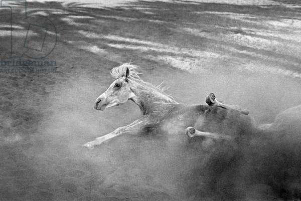 Pferd-Traum 1, 2015 (b/w photo)