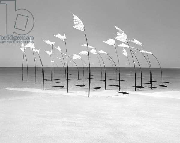 Wind-Installation I, 2015 (b/w photo)