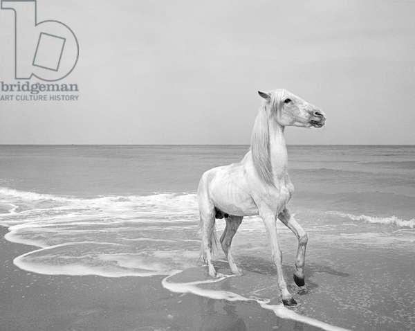 Pferd-Traum 5 (b/w photo)
