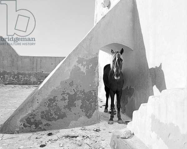Pferd-Traum 9 (b/w photo)