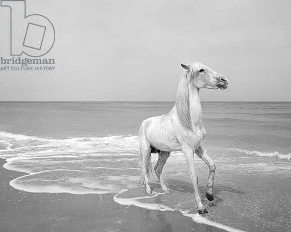 Pferd-Traum 4, 2015 (b/w photo)