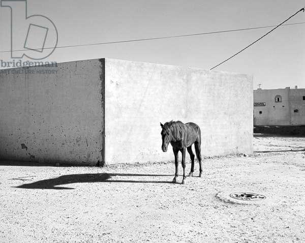 Pferd-Traum 5, 2015 (b/w photo)