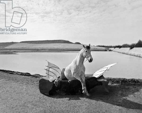 Pegasus 1, 2015 (b/w photo)