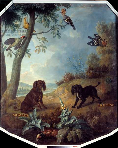Nutmeg and Hermine, the dogs of Louis XIV (1638-1715). Painting by Francois Desportes (1661-1743), 1739. Compiegne, Musee National Du Chateau