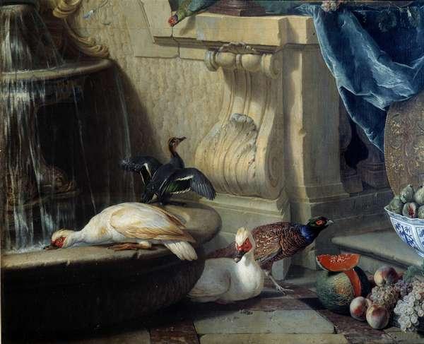 Ducks, pheasant, fruit near a fountain Detail. painting by Francois Desportes (1661-1743) 18th century Lyon, Musee des Beaux Arts