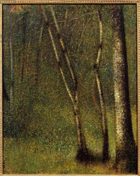 Sous bois a Pontaubert Painting by Georges Seurat (1859-1891) 1881 Sun. 0,79x0,62 m New York, Metropolitan museum - In the woods at Pontaubert or the Forest at Pontaubert. Painting by Georges Seurat (1859-1891), 1881. 0.79 x 0.62 m. Metropolitan Museum of Art New York