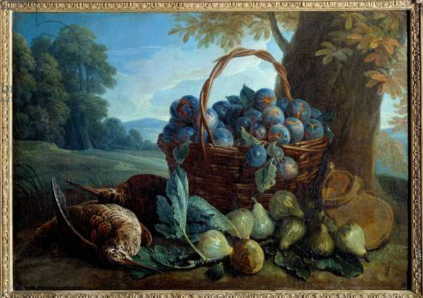 Plums, figs and beaks Painting by Francois Desportes (1661-1743) 18th century Sun. 0,5x0,7 m Laon, Musee des Beaux Arts