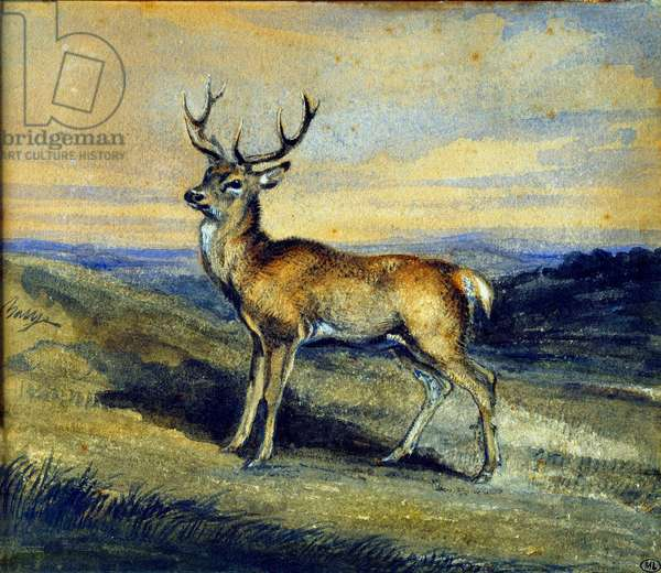 The deer. Painting by Antoine Louis Barye (1795-1875), 19th century. Watercolour and gouache.