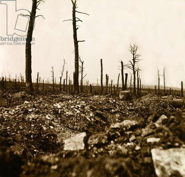 Stereoscopic glass plate on the First World War (1st, Iere, 14-18 or 1914-1918) (The First World War; WWI): Verdun, the wood of the chapter, Private collection