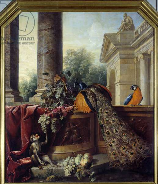 Still life with peacock A parrot, a monkey and bunches of grapes. Painting by Francois Desportes (1661-1743) 18th century Sun. 2,05x1,8 m Lyon, Musee des Beaux Arts