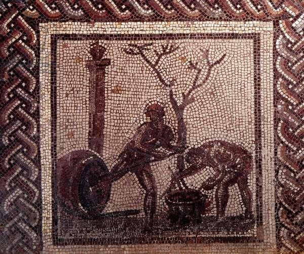 Gallo Roman Art: mosaic paving representing a rustic calendar. Jar poistering scene. End 2nd, beginning of 3rd century after JC. From Saint-Romain-en-Gal (Rhone). Saint Germain en Laye, National Museum of Archeology