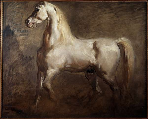 Study of white horse in left profile Painting by Theodore Chasseriau (1819-1856) 19th century Sun. 0,59x0,73 m