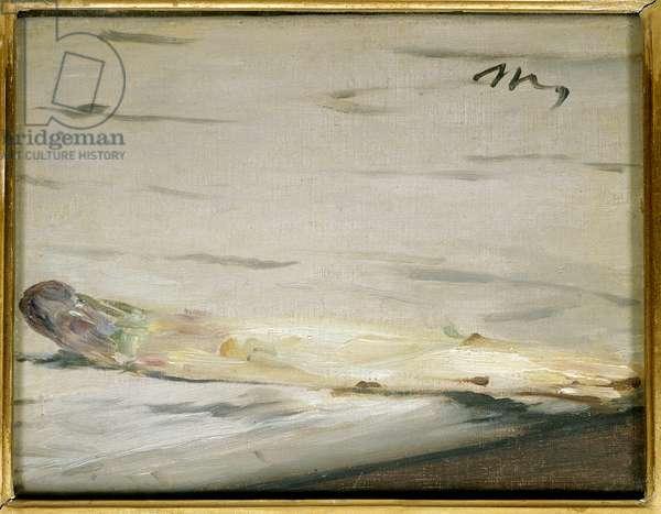 L'asparagus Painting by Edouard Manet (1832-1883) 1880 Dim. 0,16 x 0,21m. Paris. Musee d'Orsay