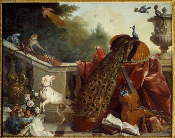 Animals, flowers and fruits A dog, a monkey playing the violin, a peacock, a parrot, a bird of paradise, string instruments. Painting by Francois Desportes (1661-1743) 1717 Sun. 1,24x2,31 m Grenoble, musee des Beaux Arts