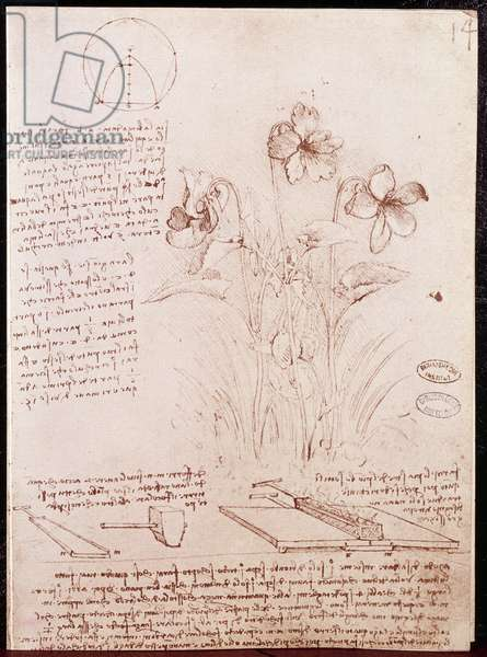 Notes and sketches of botany and geometry: narcissus. Drawing on double page of manuscript by Leonardo da Vinci (Leonardo da Vinci) (1452-1519), 1487-1508. Paris, Library of the Institute