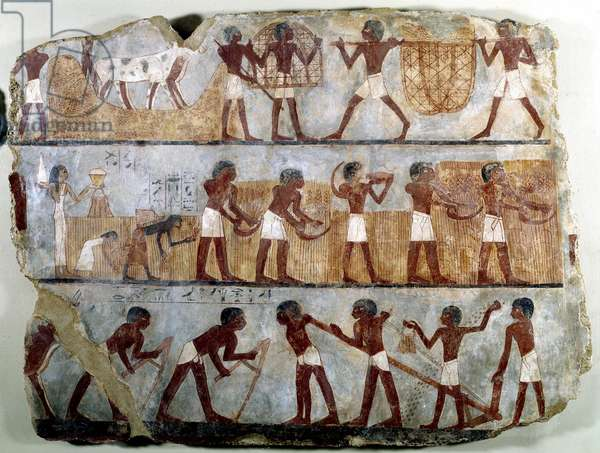 Egyptian antiquite: mural painting from the Theban tomb of Ounsou: the work of the fields: ploughing, planting, harvesting, carrying sheaves, deplanting and stripping of grains. Reg of Thutmosis (Tuthmosis or Thutmus) III, 18th dynasty. Around 1450 BC. Dim. 0,68x0,94 m. Paris, Louvre Museum