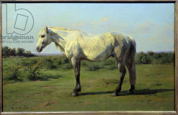 White horse in a pre. Painting by Rosa Bonheur (1822-1899), 19th century. Oil on canvas. Dim: 0.34 x 0.50m. Rouen, Museum of Fine Arts