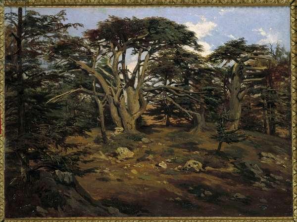 Les vieux cedres sur le Mont Liban a Boumana Painting by Antoine Alphonse Montfort (1802-1884) 19th century Sun. 0,32x0,44 m Paris, musee d'Orsay