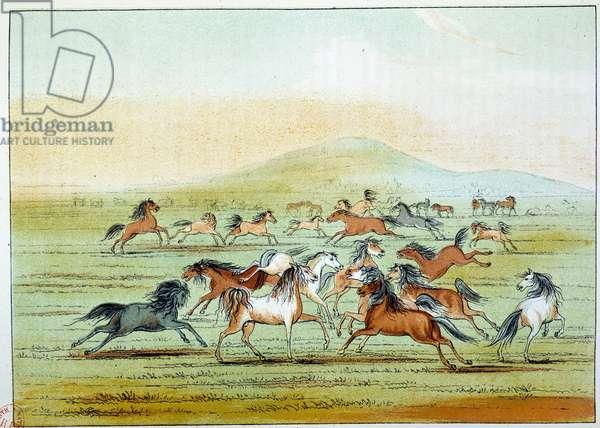 Indians of America: wild horses hunted by Indians. Illustration by George Catlin (1794-1872), 19th century. Paris, NL