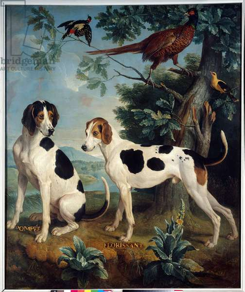 Pompee and Florissant, the dogs of Louis XIV (1638-1715). Painting by Francois Desportes (1661-1743), 1739. Compiegne, Musee National Du Chateau - Pompee and Florissant, dogs of Louis XIV (1638-1715). Painting by Francois Desportes (1661-1743), 1739. Castle Museum, Compiegne, France