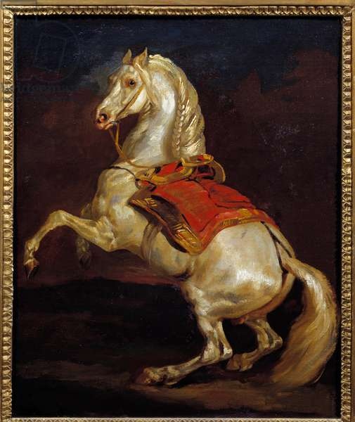 Tamerlan horse. Painting by Theodore Gericault (1791-1824), 19th century. Oil on canvas. Dim: 0.45 X 0.37m. Rouen, Museum of Fine Arts
