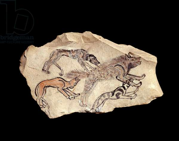 Egyptian antiquite: ostrakon (or ostracon) (plural: ostraca or ostraka) (pottery) in limestone representing three dogs hunting a hyena. 1300-1070 BC. Sun. 0,15x0,08 m From Deir el Medineh. Paris, Louvre Museum