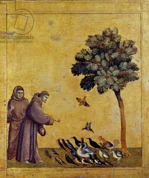 Saint Francois of Assisi preaching birds. Detail of the predelle of St Francis of Assisi receiving the stigmas. Painting by Giotto Di Bondone (1276-1337). Tempera on wood.  - Saint Francis of Assisi preaching to the birds. Detail of the predella of St Francis of Assisi receiving the Stigmata. Painting by Giotto Di Bondone (1276-1337). Tempera on wood. Louvre Museum, Paris