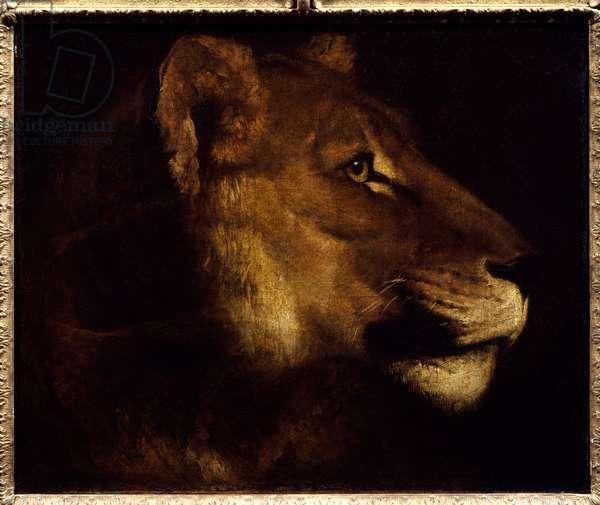 Lioness Head Painting by Theodore Gericault (1791-1824) 19th century Sun. 0,55x0,65 m Paris, Musee du Louvre. - Head of lioness. Painting by Theodore Gericault (1791-1824), 19th century. 0.55 x 0.65 m. Louvre Museum, Paris