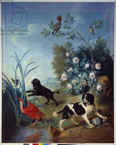 Zerbine and Jemite, the Dogs of King Louis XIV Painting by Francois Desportes (1661-1743) 1739 Compiegne, Musee national du chateau