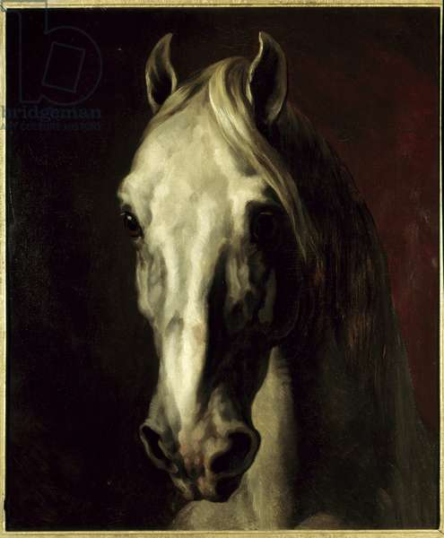 White horse's head. Painting by Theodore Gericault (1791-1824), 19th century. Dim: 0.65x0.54m. Louvre Museum.