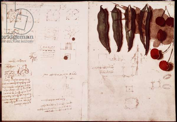 Notes and sketches of botany and geometry. Drawing on double page of manuscript by Leonardo da Vinci (Leonardo da Vinci) (1452-1519), 1487-1508. Paris, Library of the Institute