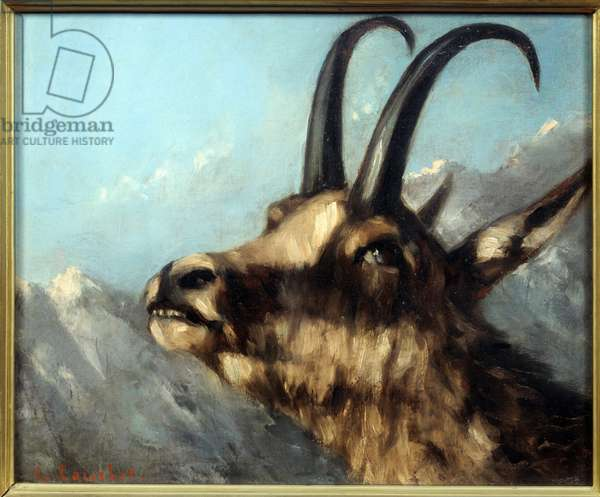 Head of Chamois Painting by Gustave Courbet (1819-1877) 19th century Sun. 0,38 X 0,46 m Paris, Musee Picasso.
