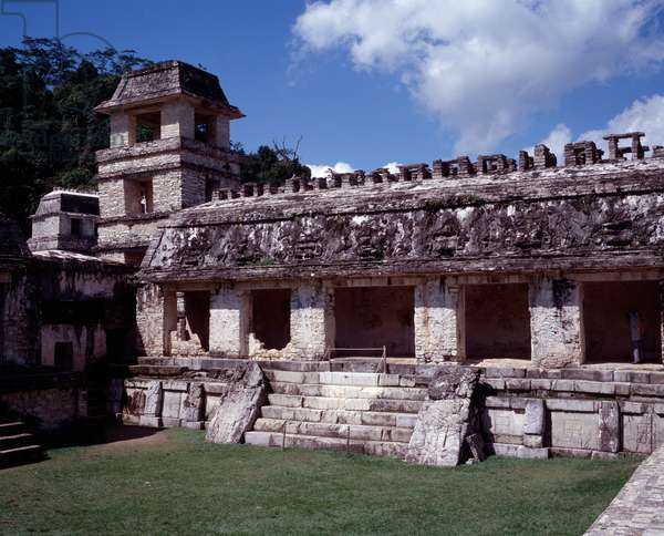 Precolombian civilization: view of the site of Palenque in Chiapas Classical Mayan period, 1st century BC- 7th century AD: the palace and the northern group.