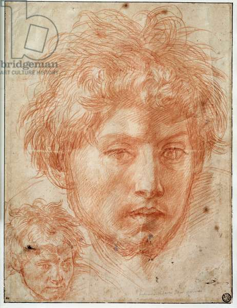 Head of man Drawing a la sanguine d'Andrea del Sarto (1486-1531) 16th century Sun. 0,33x0,25 m Paris, musee du Louvre