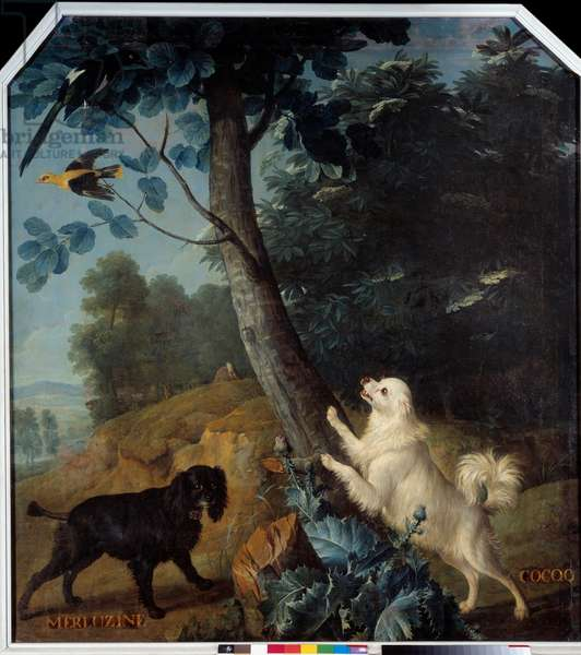 Merluzine and Cocoq, the dogs of Louis XIV (1638-1715). Painting by Francois Desportes (1661-1743), 1739. Compiegne, Musee National Du Chateau