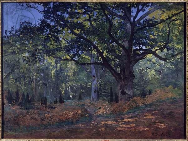 Bodmer's Oak Painting by Claude Monet (1840-1926) 1865 Dim.1.27 x 0.94 m. New York. Metropolitan Museum