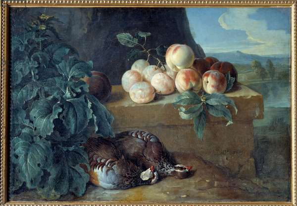 Peaches and partridges. Painting by Francois Desportes (1661-1743), 18th century. Dim: 0,50 x 0,70m. Laon, Museum of Fine Arts