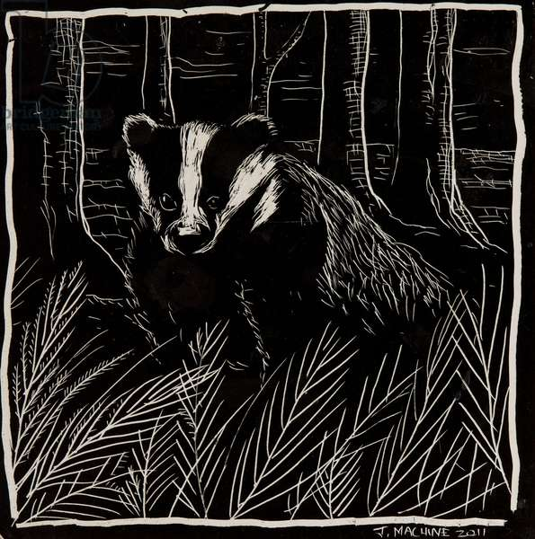 The Badger, 2011 (scraperboard)