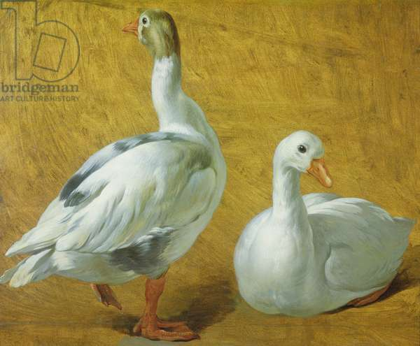 Study of Geese (oil on paper laid on canvas)