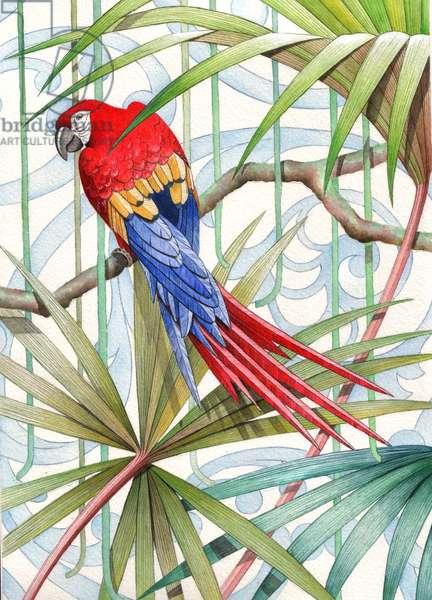 Parrot, 2008 (gouache on paper)