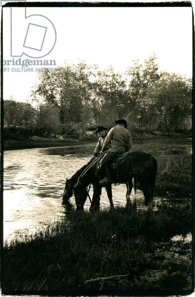 Dawn drink on the Cimarron river Oklahoma, before the days work begins, USA (b/w photo)