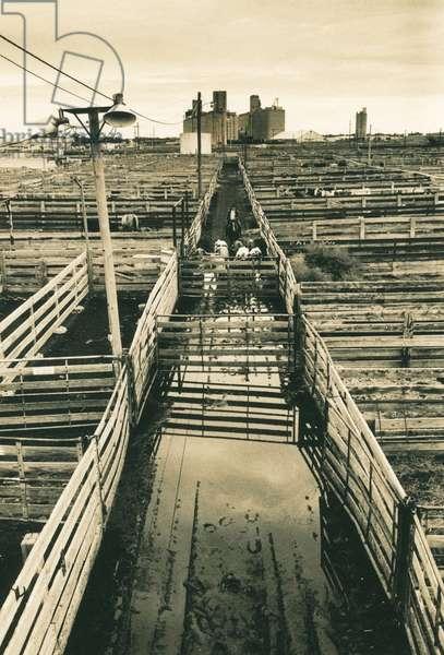Amarillo stock yards, Texas, USA (b/w photo)