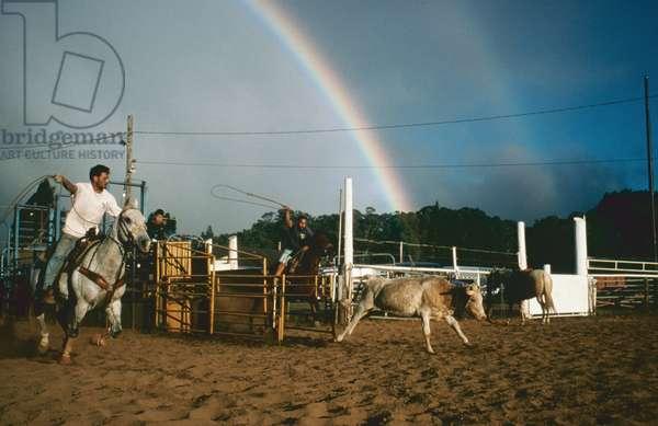 Roping practice, Maui Hawaii (photo)