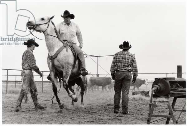 Spring branding on the Bell ranch, New Mexico, USA, 1998 (b/w photo)